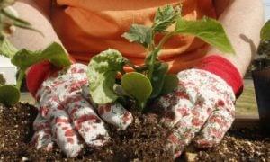 Záhradkárka
