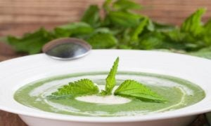 Žihľavová polievka