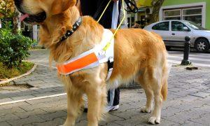 Asistenčný pes