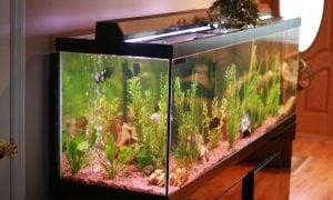 Domáce akvárium