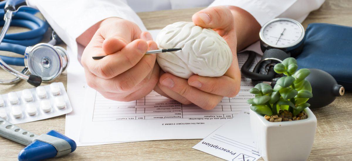 ruky s maketou mozgu
