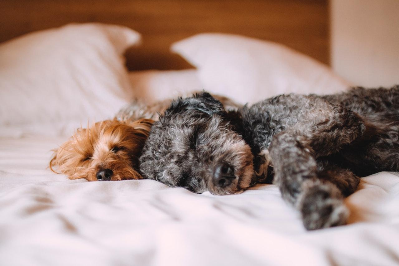 Psi v posteli