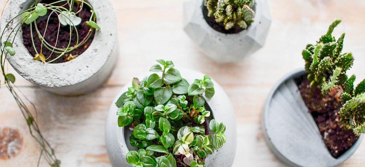 Cementové kvetináče s rastlinami