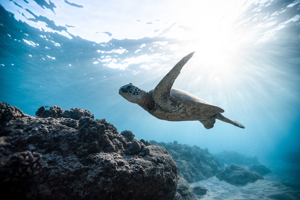 hlboký oceán