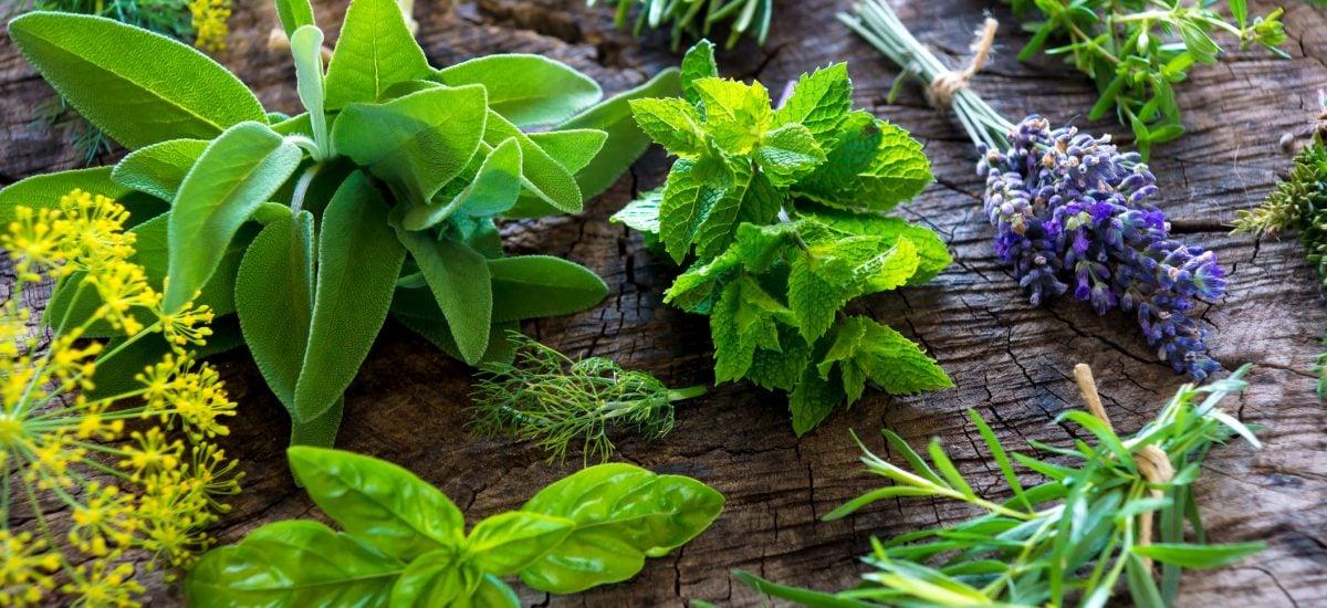 Čerstvé bylinky na stole