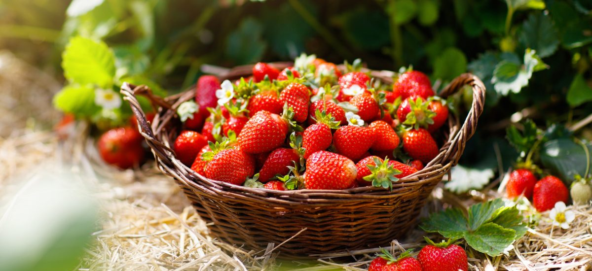 jahody v košíku