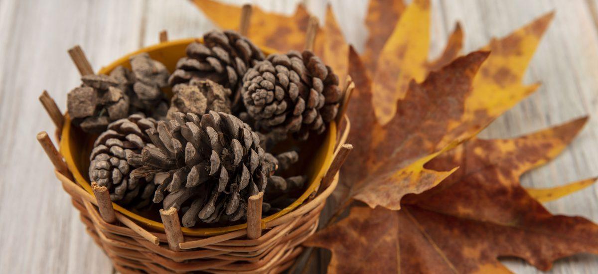 Šišky a žlté listy